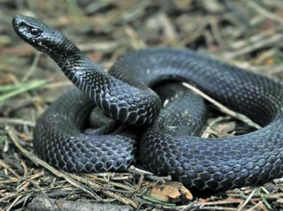 Буковинців попередили про пік активності змій: в яких районах вже постраждали люди