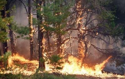 Рятувальники попереджають: в Україні оголосили надзвичайний рівень пожежної небезпеки