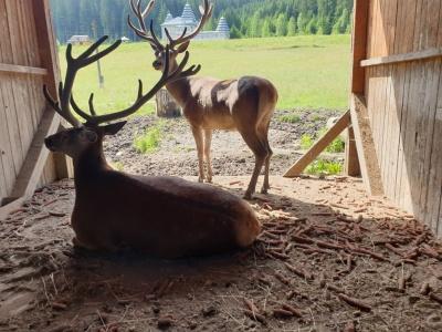 Дикі звірі – на відстані руки: у вольєрі лісництва на Буковині живуть ведмеді, олені й борсуки