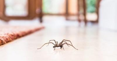 Причини, через які у вашій домівці багато павуків
