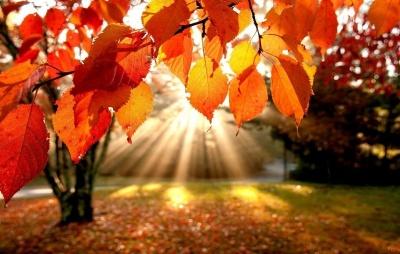 Синоптики розповіли, яким буде початок осені в Україні