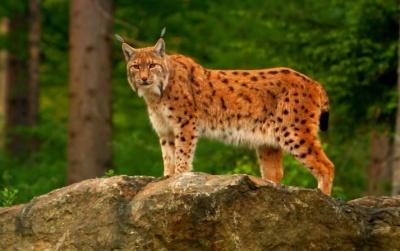 Кількість диких тварин катастрофічно зменшується. За 50 років їх популяції скоротилися на 70%