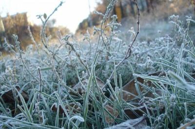 У горах Буковини очікуються сильні заморозки