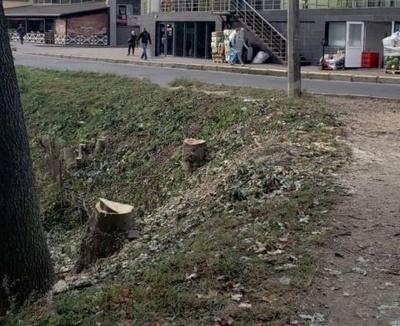 Керівництво найбільшого парку Чернівців поскаржилось на Бешлея в НАБУ через вирубку дерев