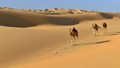 Анекдот дня: про пустелю і сало
