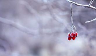 Якою буде зима 2020-21 в Україні: кліматолог озвучила прогноз погоди