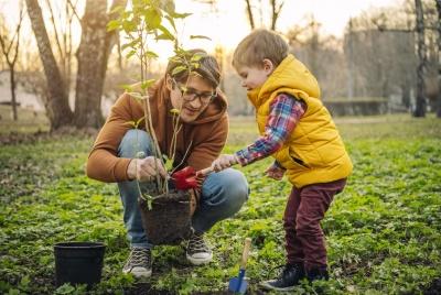 Посадять за день 50 тисяч дерев: Буковина приєднається до всеукраїнської акції