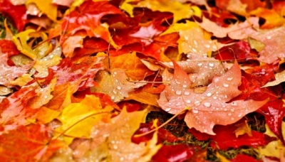 Тепло і вітряно: синоптики дали прогноз на початок тижня
