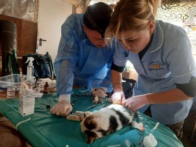 Чернівчани у прифронтовій зоні лікували собак – фото