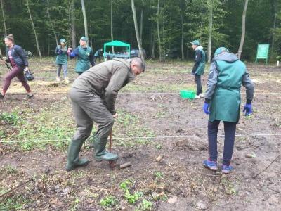 «Любимо, коли росте ліс»: на Буковині в акції «Озелення України» взяли участь школярі