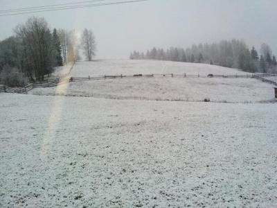 У горах Буковини випав сніг – фото