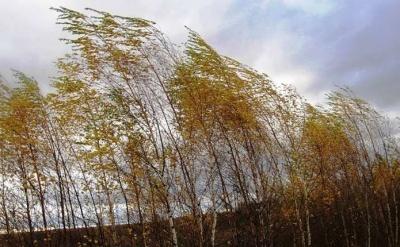 Штормове попередження: синоптики прогнонують погіршення погоди 1 листопада на Буковині
