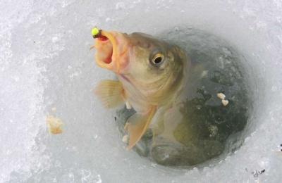 У зимувальних ямах заборонили ловити рибу: де на Буковині діють ці обмеження