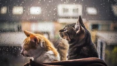 Похолодання та дощі. В Україну суне атмосферний фронт