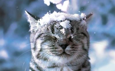 Коли в Україну прийдуть морози і сніг: прогноз