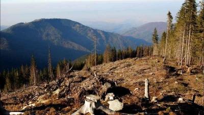 На Буковині активно відновлюватимуть ліси
