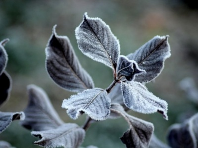 В Україну йде похолодання: вночі очікують до 6° морозу