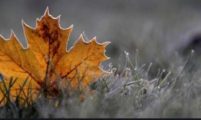 На Буковину насувається нічний мороз: прогноз погоди