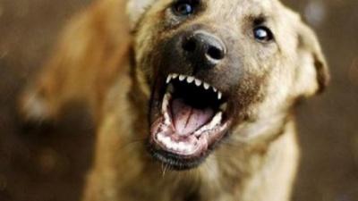 На Буковині зафіксували два випадки сказу в домашніх собак