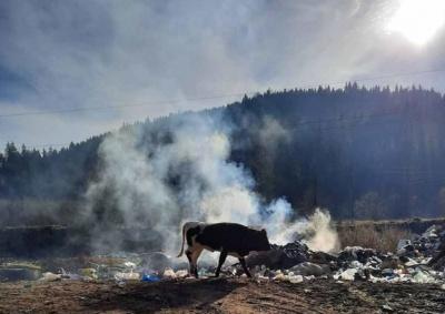 «Скот гибнет от мусора»: горные села на Буковине страдают от масштабного свалки - фото