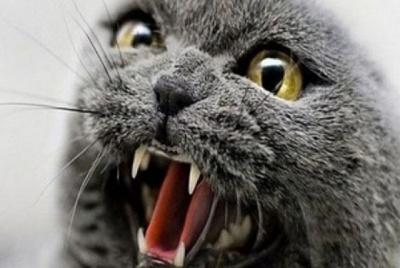На Буковині скажений кіт напав на жінку