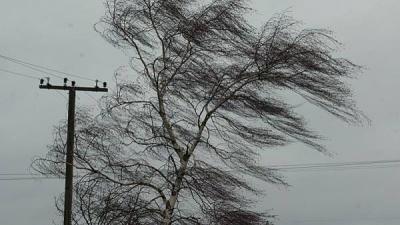 Штормове попередження: на Буковині упродовж кількох днів прогнозують сильний вітер