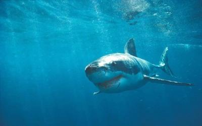 В Єгипті напад акули на туристку потрапив на відео