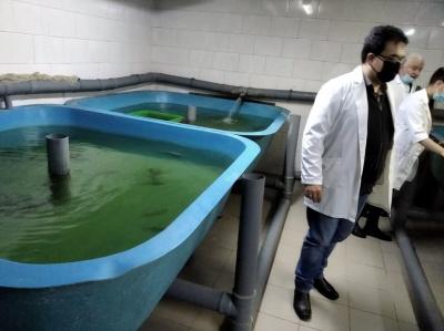 У лабораторії ЧНУ вирощують червонокнижних риб під сонячними батареями - фото