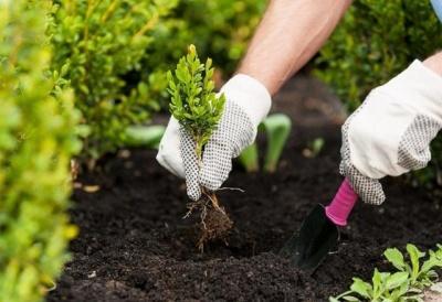 Посівний календар на 2021 рік: коли найкраще садити овочі і фрукти