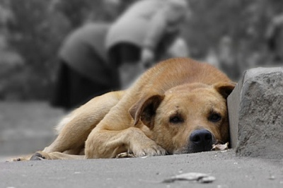 Конали у муках на очах у людей: у місті на Буковині жорстоко знищили безпритульних тварин