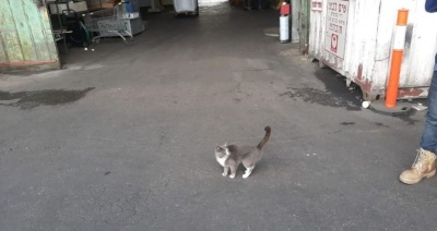 Кішка подорожувала 19 днів з Одеси до Ізраїлю в контейнері з з цукерками