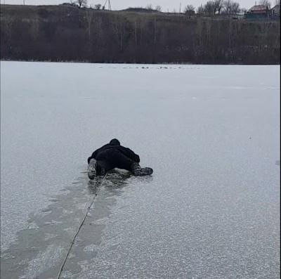 Примерзли до криги: на Буковині рятувальники допомогли лебедям