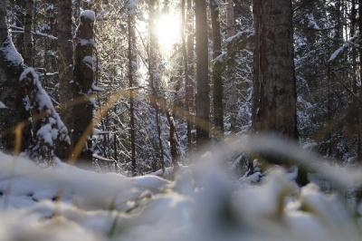 Синоптики розповіли, коли минуть морози в Україні