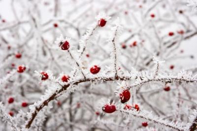 Лютий холод: у Чернівцях на Водохреще зафіксували -18 градусів