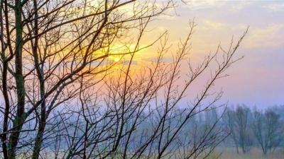 Погода на Буковині 21 січня