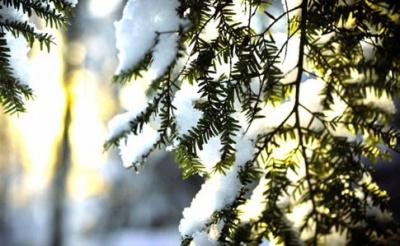 На Буковині різко потепліє: якою буде температура