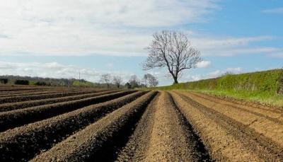 Земля у Чернівецькій області виявилась однією з найдорожчих в Україні