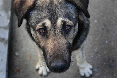 У Чернівцях невідомі труять собак: які симптоми і як надати першу допомогу тваринам