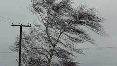 Штормове попередження: у четвер на Буковині очікується сильний вітер