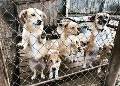Керівниця PR-напрямку EVA Олександра Гнатик: Наш новий соціальний кейс  допоміг 7 притулкам для тварин за рахунок відмови від новорічних подарунків партнерам*