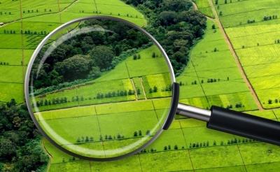 Ринок землі: стало відомо, скільки коштуватиме гектар ріллі на Буковині