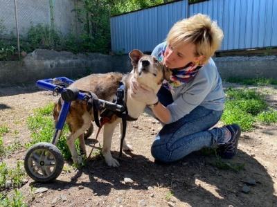 Живуть лисиця, собаки та коти: у Чернівцях жінка  утримує притулок для старих та немічних тварин