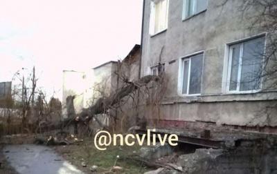У Чернівцях дерево розтрощило вікно житлового будинку – фото