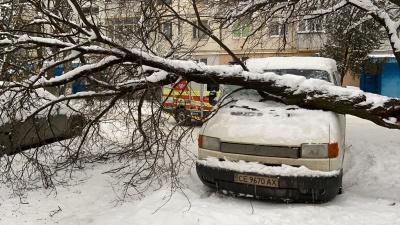 У спальному районі Чернівців на припарковану автівку впало дерево