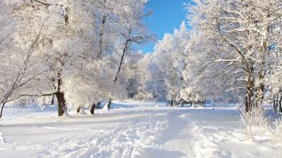 Синоптики розповіли, де на Буковині випало найбільше снігу