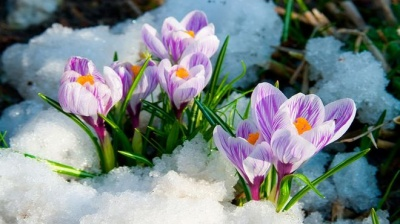 Коли в Україну прийде весна: прогноз синоптиків