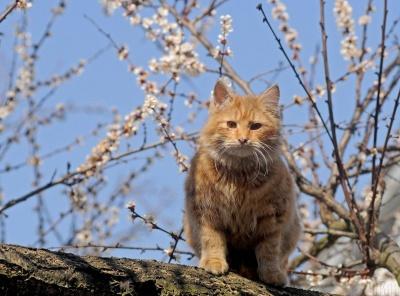 Сонячно і без опадів: завтра на Буковині почнеться весняне потепління