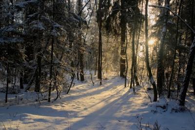 Потепління замість морозів: якою буде погода на Буковині