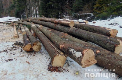На Буковині поліція виявила підпільний склад деревини - фото