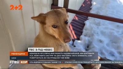 Уже втомило: на Рівненщині пес постійно опиняється на даху магазина